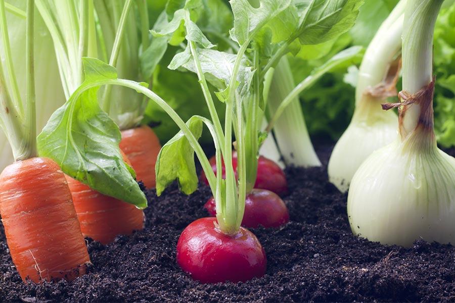 kideaz dossier jardinage maison plantes appartement