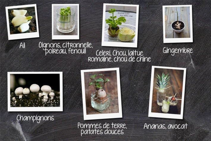 Kideaz-Legumes-Regrow-Plantes-repoussent