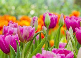 kideaz dossier vert deco plantes interieur maison printemps
