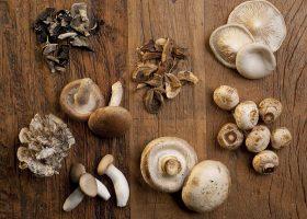 Kideaz champignon