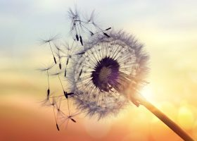 Kideaz-pollen