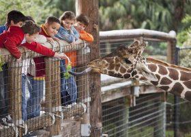 Kideaz zoo
