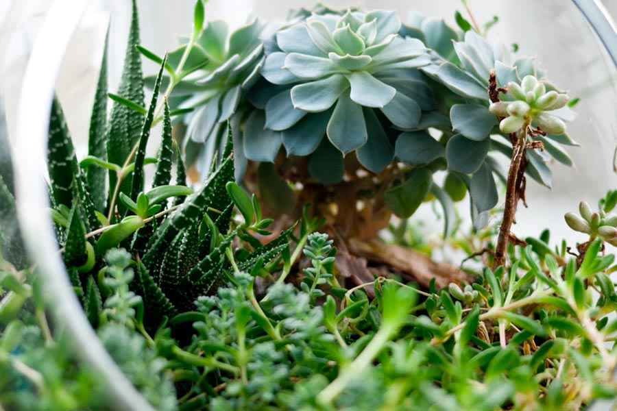 kideaz plantes printemps