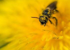 kideaz abeilles