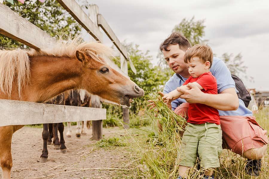 kideaz-famille-ferme-animaux-top5