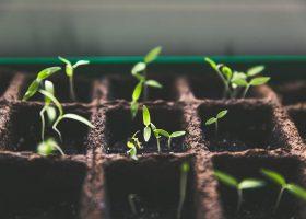 kideaz jardinage plantes