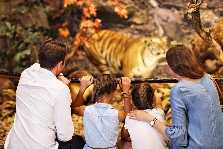 kideaz parents enfants famille musee histoire naturelle sciences