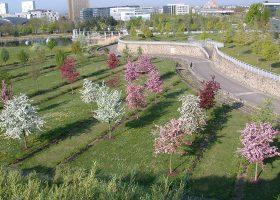 kideaz workshop arboretum