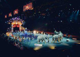 kideaz cirque animaux