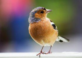 kideaz top5 oiseaux atelier