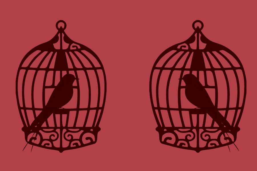 kideaz oiseaux cage dessin prison