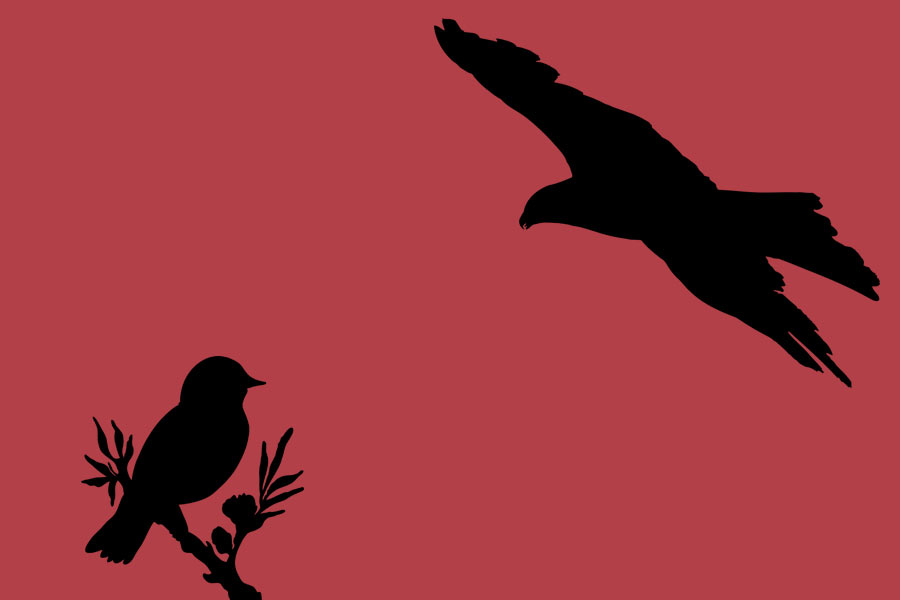 kideaz oiseaux branche aigle