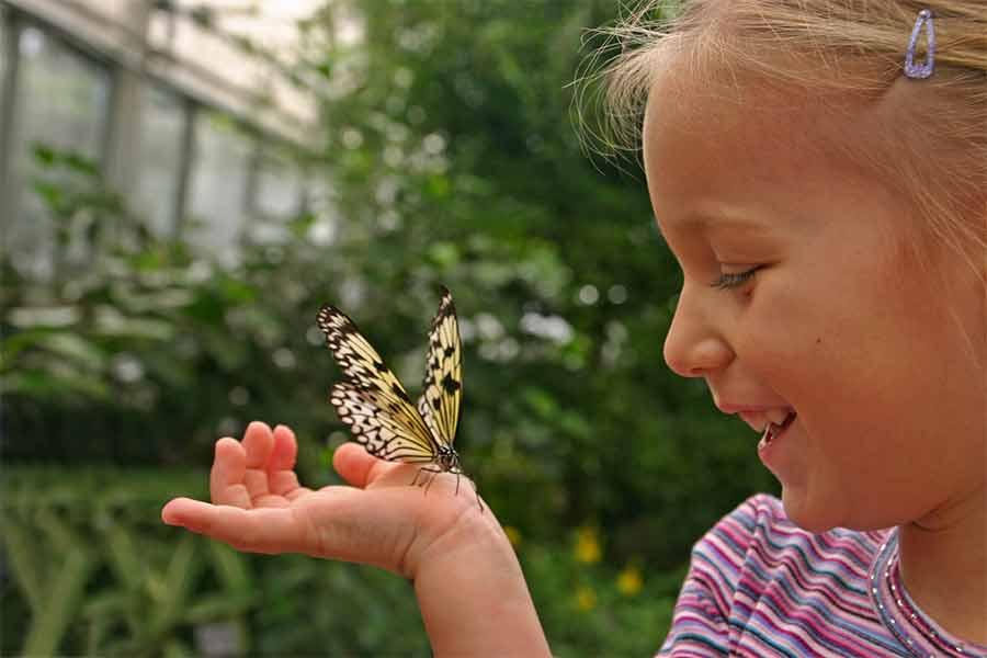 kideaz jardin papillon