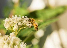 sensibilisation-abeilles-biodiversite-luxembourg-kideaz