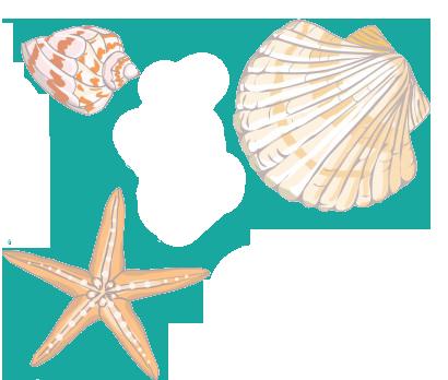 illustrations coquillages