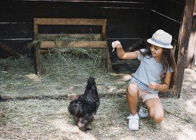 kideaz poule enfant ferme