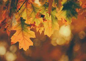 kideaz automne couleurs feuilles orange