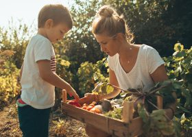 kideaz cueillette jardinage enfant parent