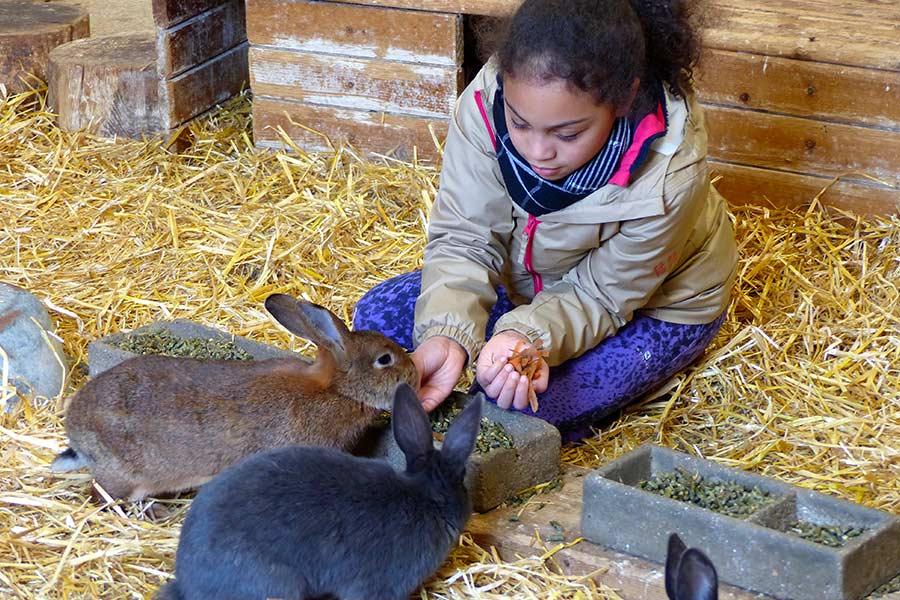 kideaz ferme pedagogique naut nourrissage lapins enfant