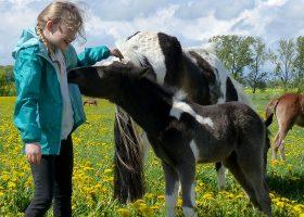 kideaz ferme pedagogique naut nourrissage poulain fillette