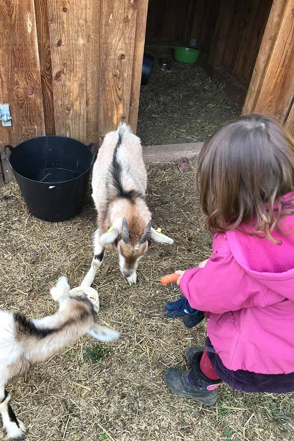 kideaz-creche-cannelle-et-caramel-enfant-animaux