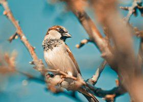 kideaz moineau oiseau nature