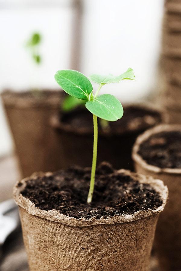 kideaz jardinage pousse semis plantation