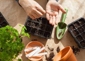 kideaz jardinage godets semer plantation famille