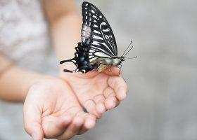 kideaz papillon enfant reouverture jardin des papillons
