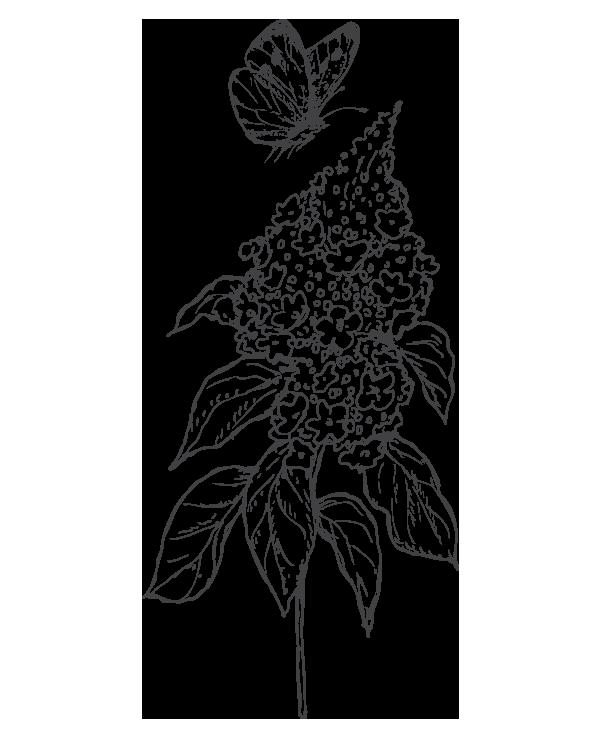 kideaz papillon nature fleur illustration 2