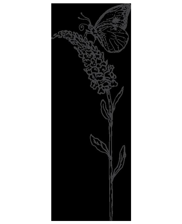 kideaz papillon nature fleur illustration 3