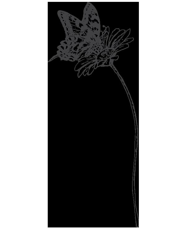 kideaz papillon nature fleur illustration 4