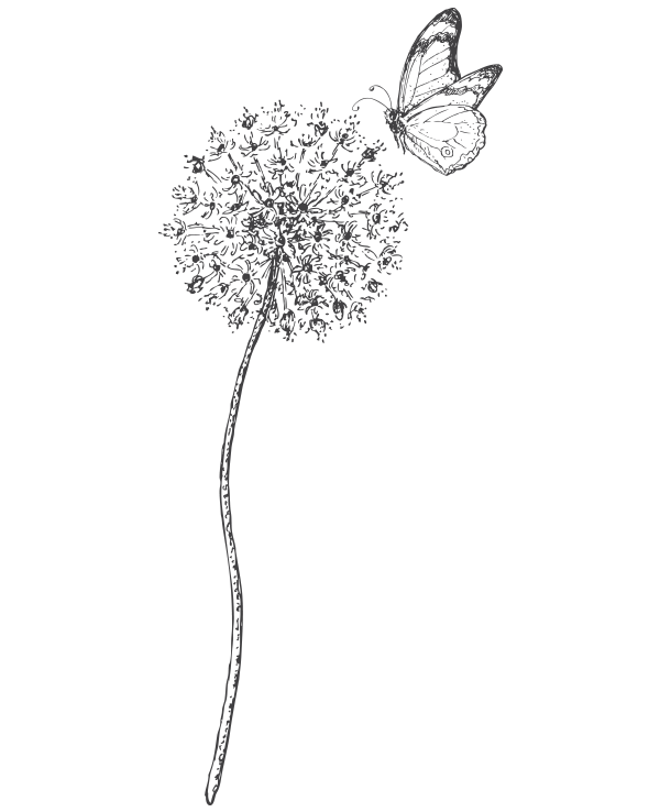 kideaz papillon nature fleur illustration