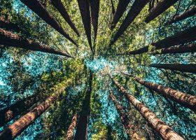 kideaz foret arbre tronc