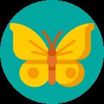 kideaz papillon animaux