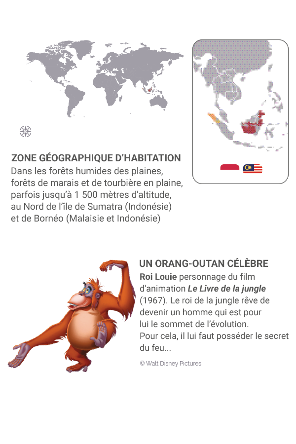 little kideaz magazine dossier grands singes fiche orang utan habitation