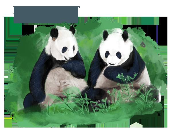 little kideaz magazine ludo educatif panda geant 5