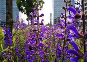 kideaz copyright fonds kirchberg promenade plantes medicinales