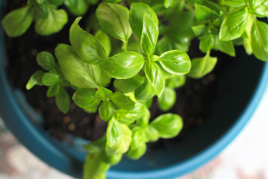 kideaz herbes aromatiques jardinage plantes