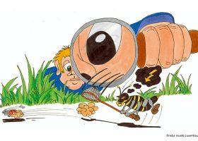 kideaz copyright natur musee entomolog op der spuer