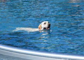 kideaz copyright Aqua Park Beaufort Hundebadetag