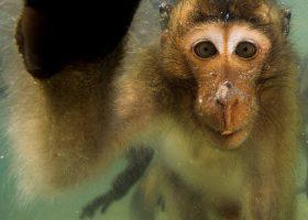 kideaz expo singe qui voulait voir la mer