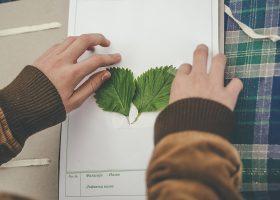 kideaz herbier enfant diy collage feuilles nature