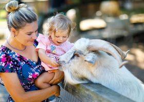 kideaz parc animalier zoo enfant parent nourrir
