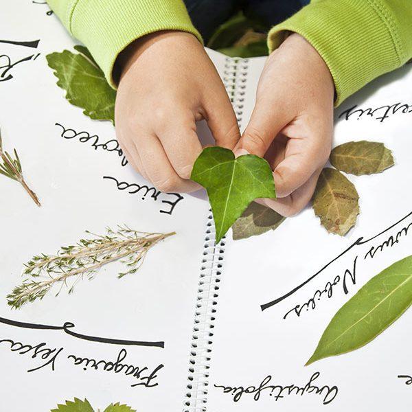 kideaz enfant herbier herbarium plantes feuilles collage