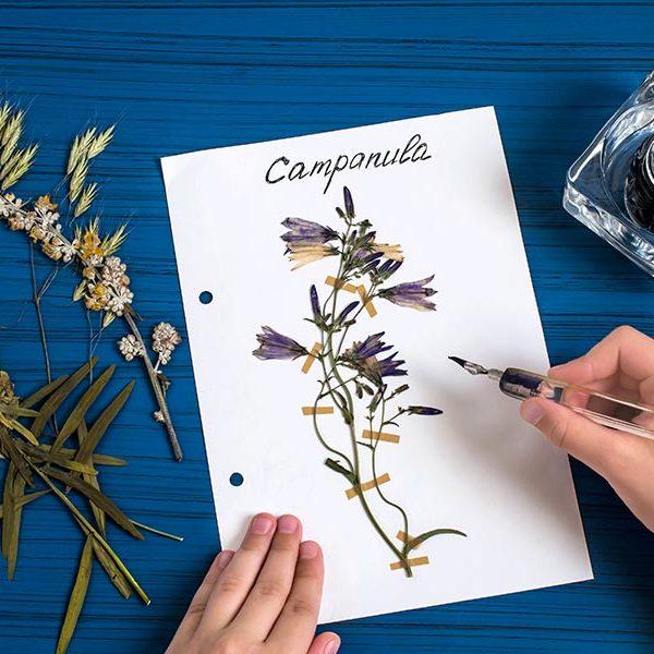 kideaz herbier decoration page plante seche